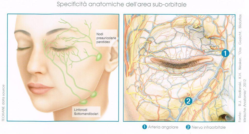 anatomia area sub-orbitale